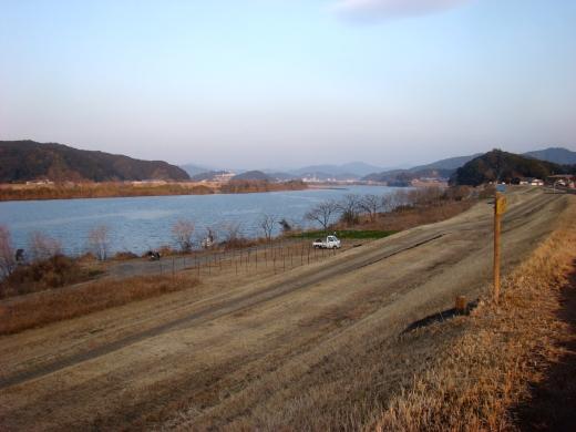 竹島大橋の堤防下の青のり